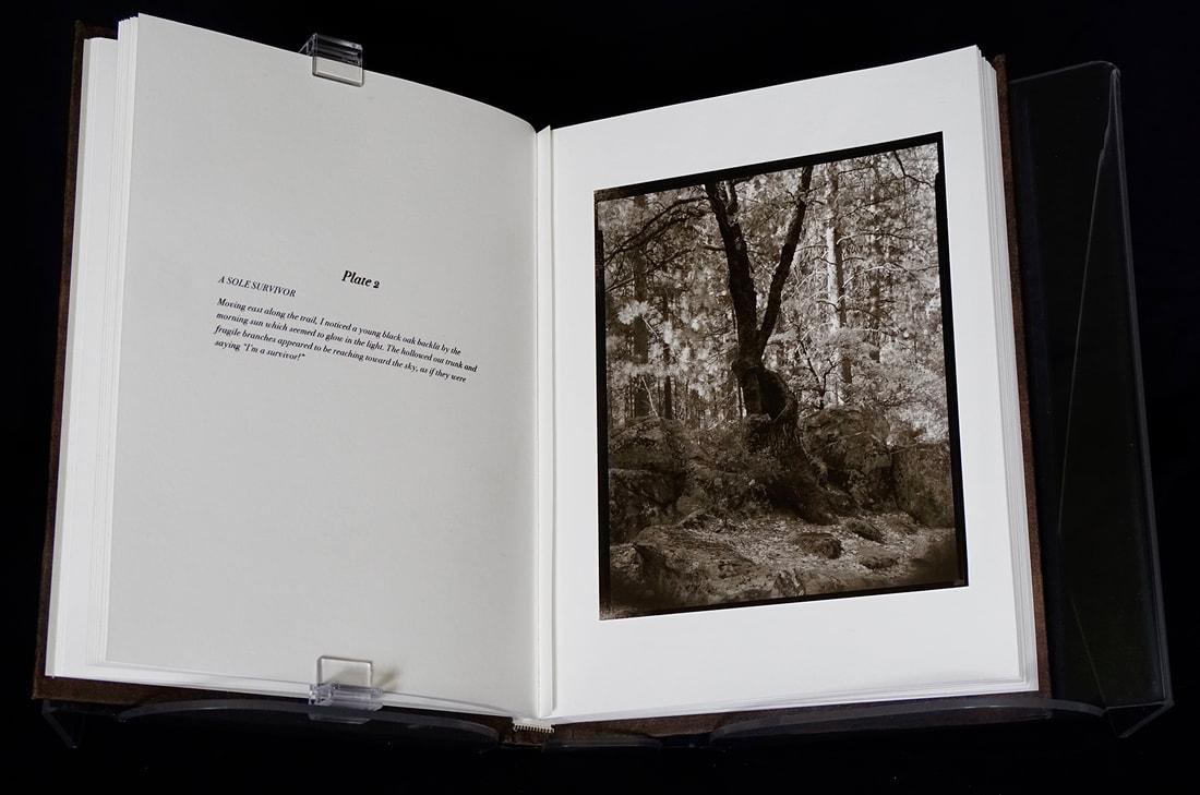 10-book-page-2-web_orig