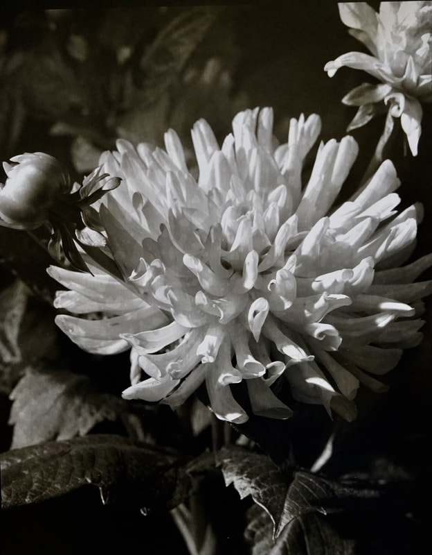 Floral Brilliance