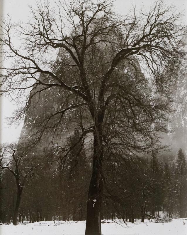 Black Oak, Sentinel Dome Winter
