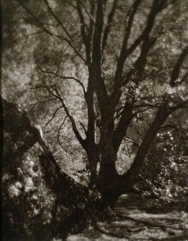 Yosemite, Sunlit Trail, Black Oak