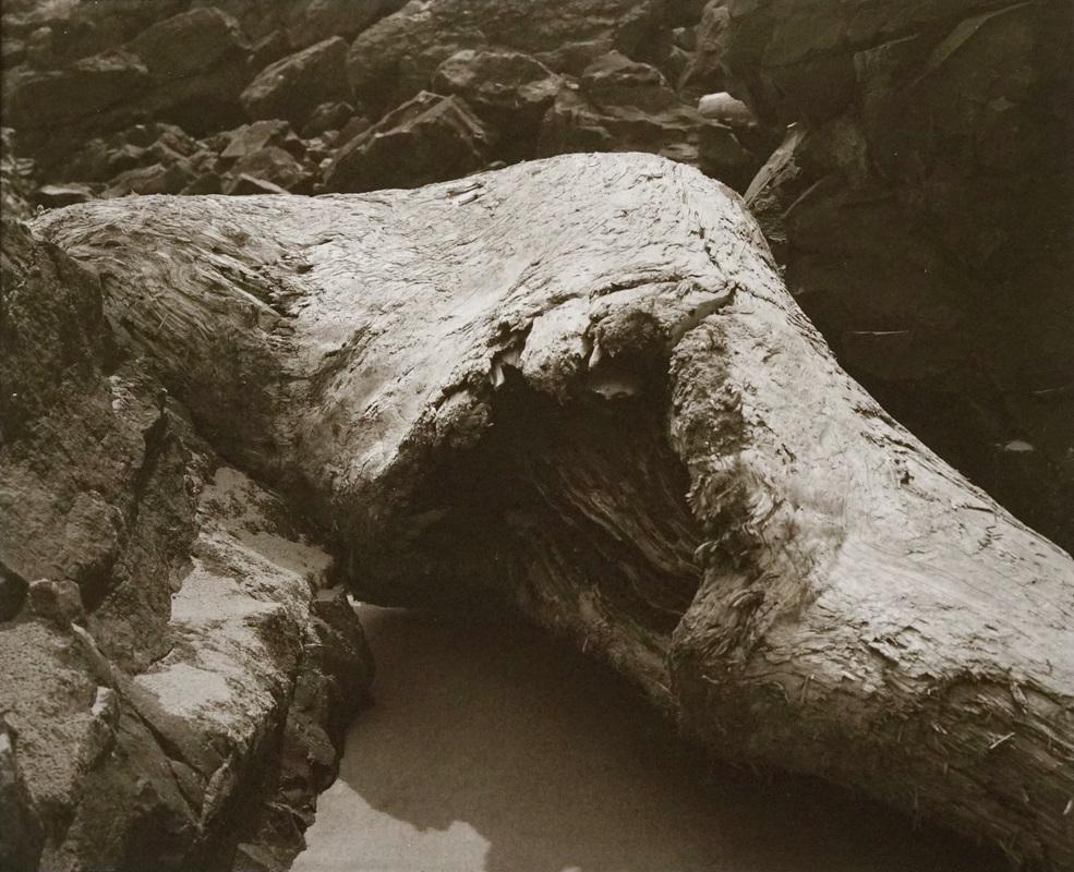 Driftwood, Oregon Coast