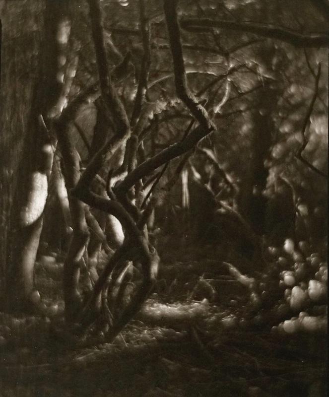 Trinity Forest #2