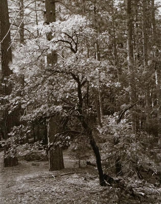 Black Oak Beginnings